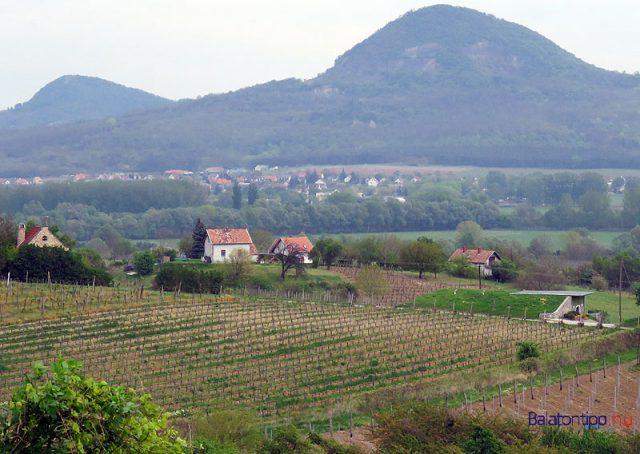 A Szent György-hegy délkeleti lankái szőlőkkel - a háttérben a Gulács és a Tóti-hegy