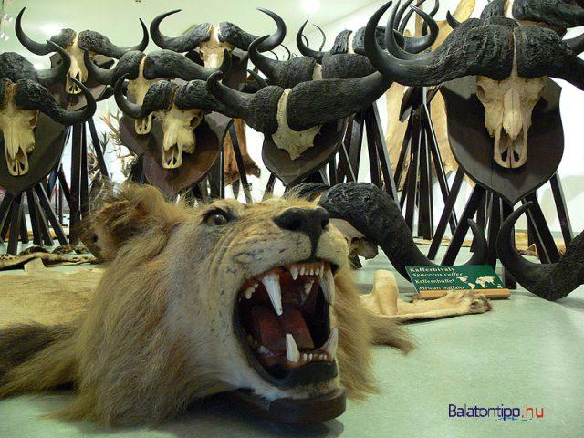 A vadászati kiállítás egyik részlete