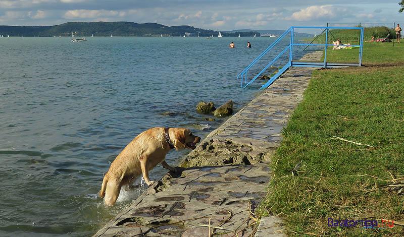 A nagyobb kutyák szabadon közlekednek a partfalon is