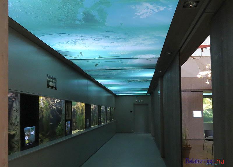 A látogatóközpont egyik akváriumsora