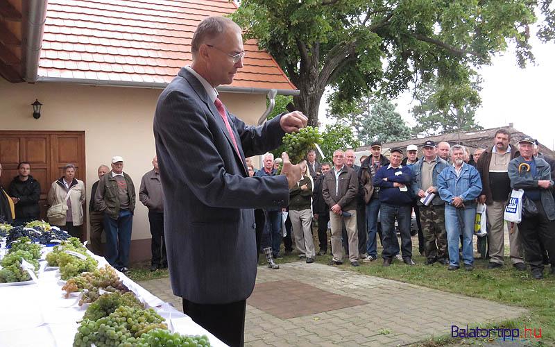 Kocsis László egy fürt Korona szőlővel a tavalyi bemutatón - fotó Győrffy Árpád