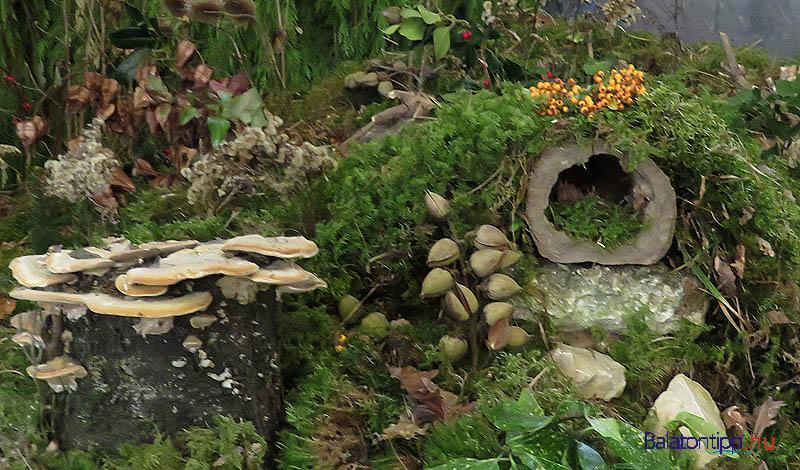 Sziklák gombákból, barlang egy odvas fatörzsből