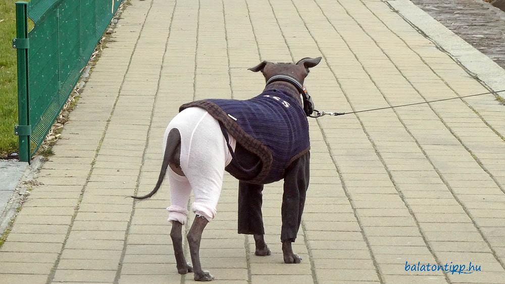 Kutya divat a Mikus Gyula sétányról