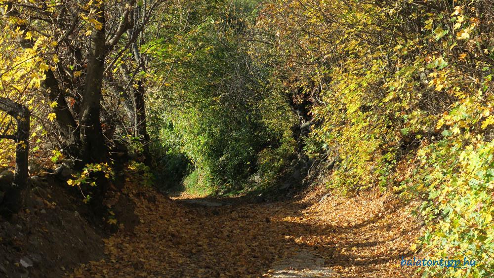 Őszi ösvény a Csobánc oldalában