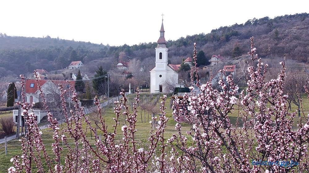 Virágzó mandulafák a Becehegy oldalában Balatongyörökön a Becehegyi-kápolnával a háttérben 2021. március 4-én - Fotó: Győrffy Árpád