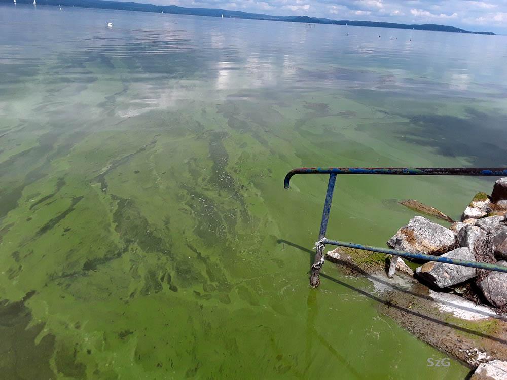 Az algáktól már-már spenóthoz hasonlító víz Balatonszárszón a Kond utcánál