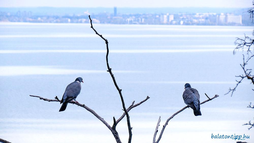 Galambok siófoki kilátással